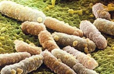 Грибок рода Candida