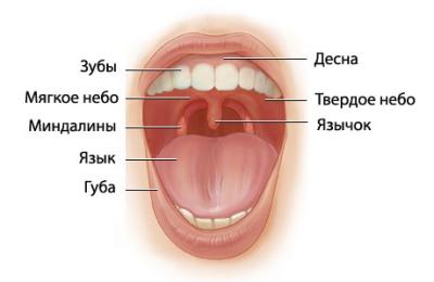 паразиты в горле человека фото