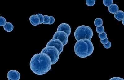 Стрептококковая и стафилококковая инфекция