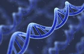 генетической предрасположенности