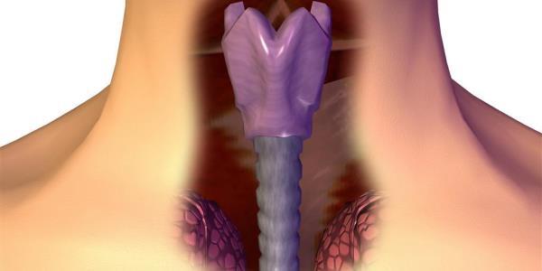 Как выглядит орган