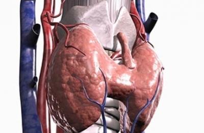 Патологии органа