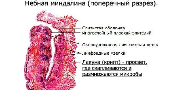 vnutrennee-sostav-tkani