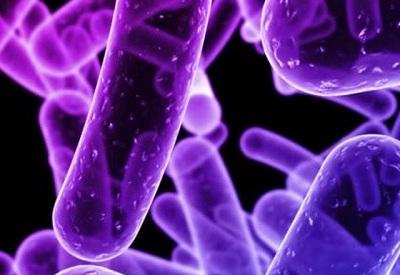 9659-antrax-bacteria-c